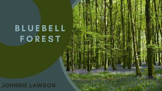 8 Hours Nature Sounds Relaxation Meditation Birdsong Birds singing Sounds of the Forest Johnnie Laws