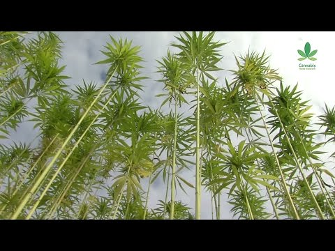 Why aren't we building more with hemp? – Part 1