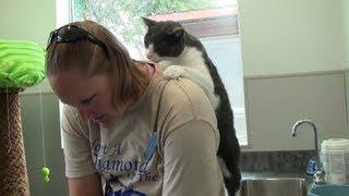 猫村さんは存在した!?ナデナデするとお礼に背中をマッサージしてくれる猫