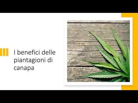 I Benefici delle piantagioni di Canapa