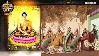 Đừng Khóc Vì Cuộc Đời Bạn Khổ Đau, Phật Dậy số phận con người do đâu Nhân quả báo ứng thức tỉnh bạn
