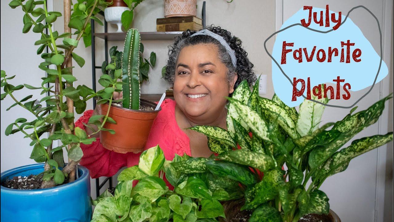 July Plant Favorites | Philodendron, Aglaonema, Pothos Manjula