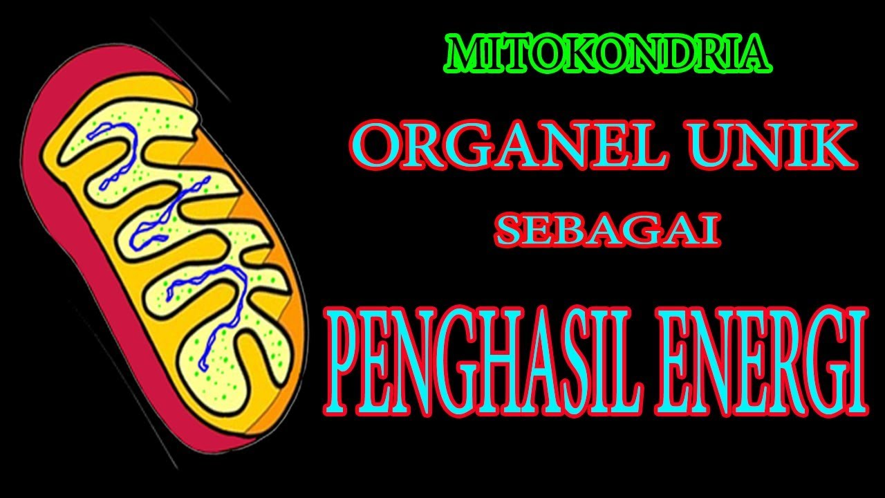 Organel Sel Struktur Dan Fungsi Mitokondria Youtube