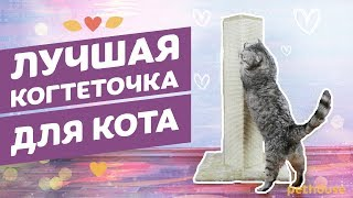 "Когтеточка-столбик для кошек Trixie ""Soria"" обзор"