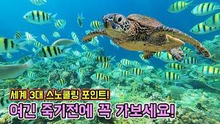 멸종위기 야생 바다거북들과 니모(Nemo),해수어들이 …