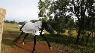Кольца/конный спорт