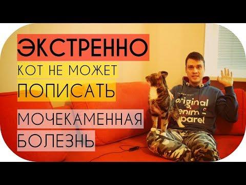Кот не может пописать что делать срочно / Мочекаменная болезнь у кота