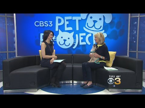 CBS3 Pet Project: How Pet Adoption Helps Both Pets And Their Owners