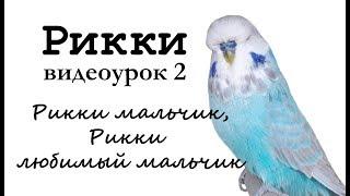 """Учим попугая Рикки говорить. Видеоурок 2: """"Рикки мальчик, Рикки любимый мальчик"""""""