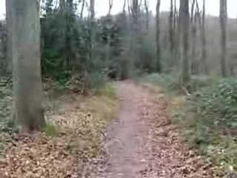 A walk through the English woodland countryside (part 2 of 2