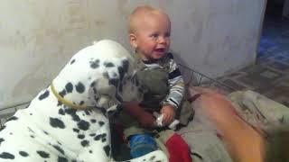 Далматин играет с ребенком