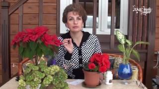 видео Бегония: уход в домашних условиях