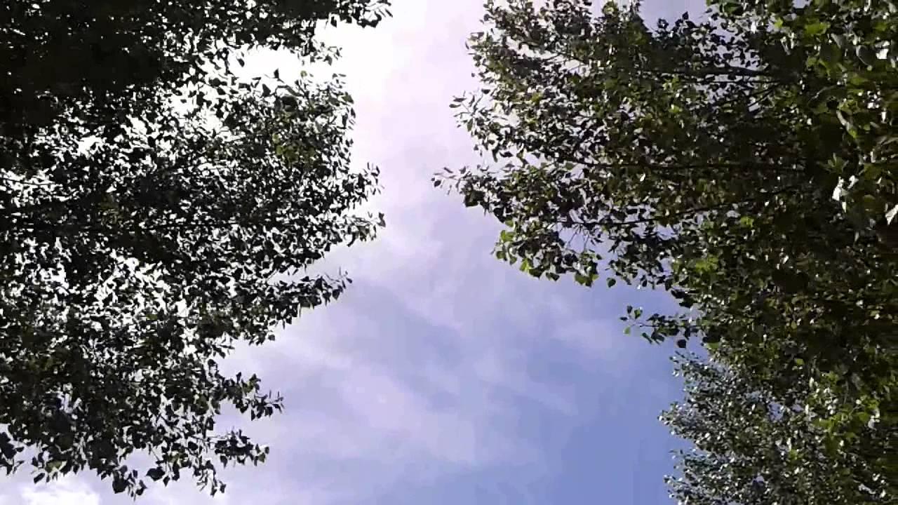 Risultati immagini per il vento tra le foglie