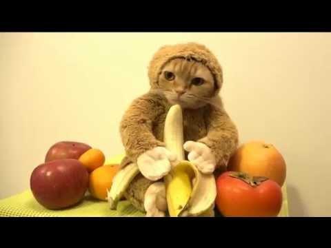 Смешные котики: необычная одежда для кошек | Ярмарка Мастеров