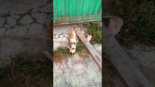 Котята даром в хорошие руки
