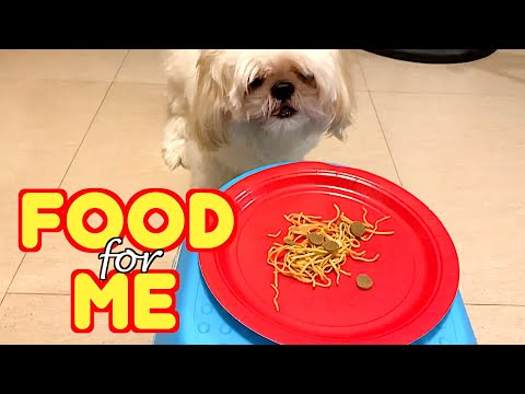 Shih Tzu Orders His Favorite Menu By Ringing The Bell ( Cute Dog Video )