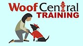 woof central dogs youtube
