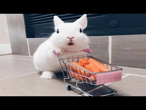 Funny and Cute Baby Bunny Rabbit Videos – Baby Animal Video Compilation (2020)
