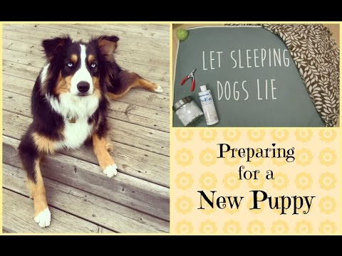 Preparing for a New Puppy | Life With Aspen|