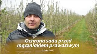 Zwalczanie mączniaka jabłoni z wykorzystaniem nowej substancji czynnej fungicydu Kendo 50 EW