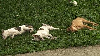 У Коломиї невідомі продовжують труїти собак