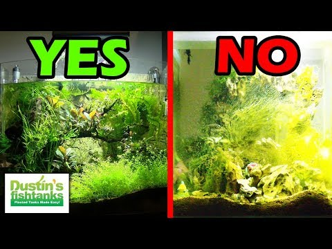 UNBALANCED PLANTED AQUARIUM - Tale Of 2 Fish Tanks