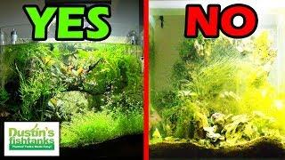 UNBALANCED PLANTED AQUARIUM - Tale of 2 Fish Tanks