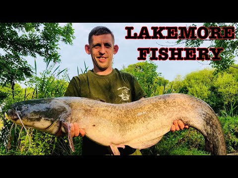 CATFISHING At LAKEMORE FISHERIES - WHAT A SESSION!