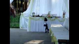 собака на свадьбе 08.08.2012