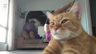 Наглый рыжий котяра и его хозяйка!