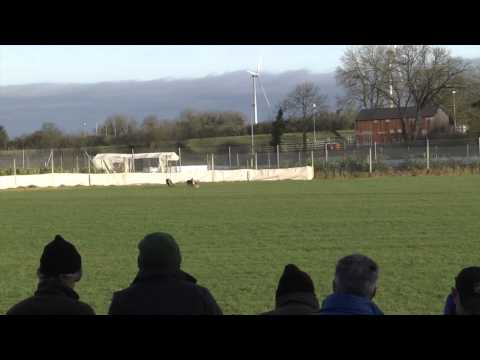 Templetouhy coursing 2015 Finals day