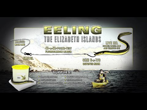 Rigging Eels For Striped Bass