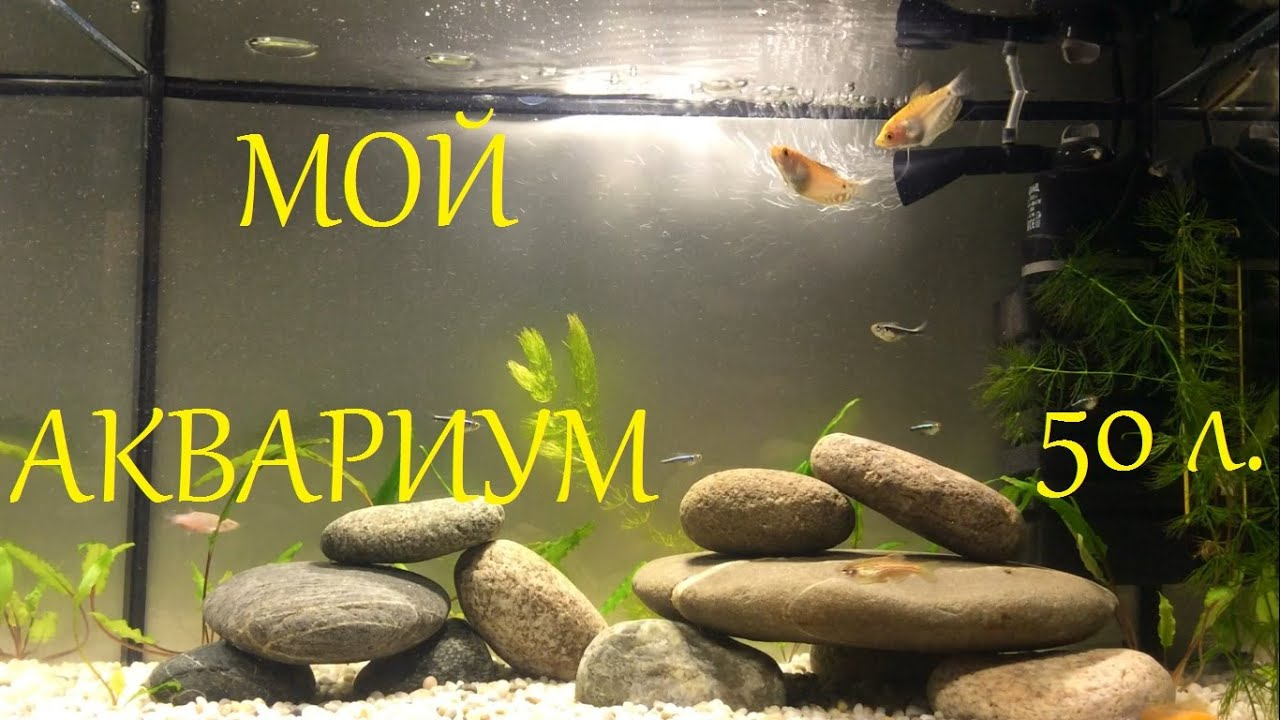 Мой аквариум на 50л. Рассказ о начинке/населении и т.д.