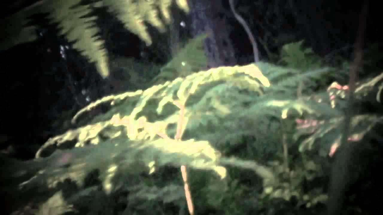 mokoma-illan-henki-mokomaofficial