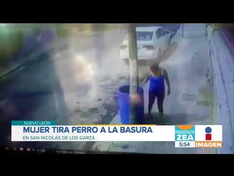 ¡Mujer tira perro a la basura! | Noticias con Francisco Zea