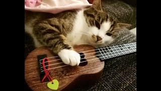 Талантливые коты Подборка смешного видео с котами для хорошего настроения