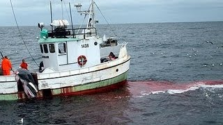 Japan contests international court of justice s right to rule on whaling dispute