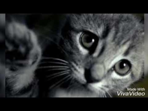 Песни бедный кот