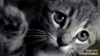 Грустная песня про кота ( Дворовый кот) 😢😥😔 до слёз