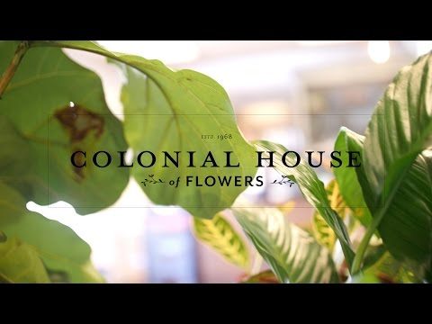 Colonial House Of Flowers Promo Video