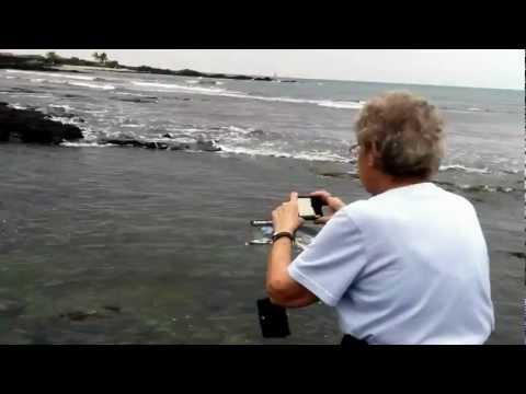 Mom views Sea Turtles at Kaloko-Honokohau National Historic