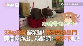 33kg惡霸犬塞菜籃等阿嬤提出門 腰間肉炸出網:塞不下啦|寵物|狗|精選影片