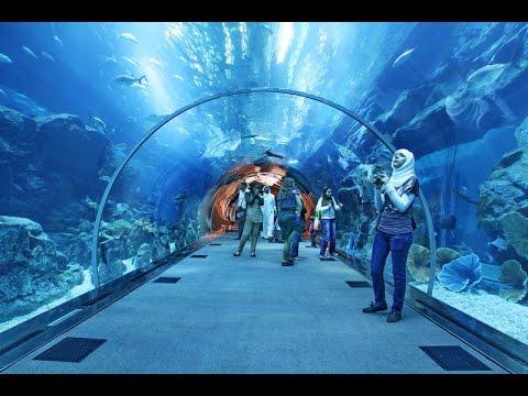Dubai Aquarium Underwater Zoo Youtube