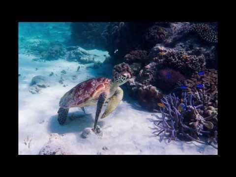 Canon G7X Underwater Edits Lightroom