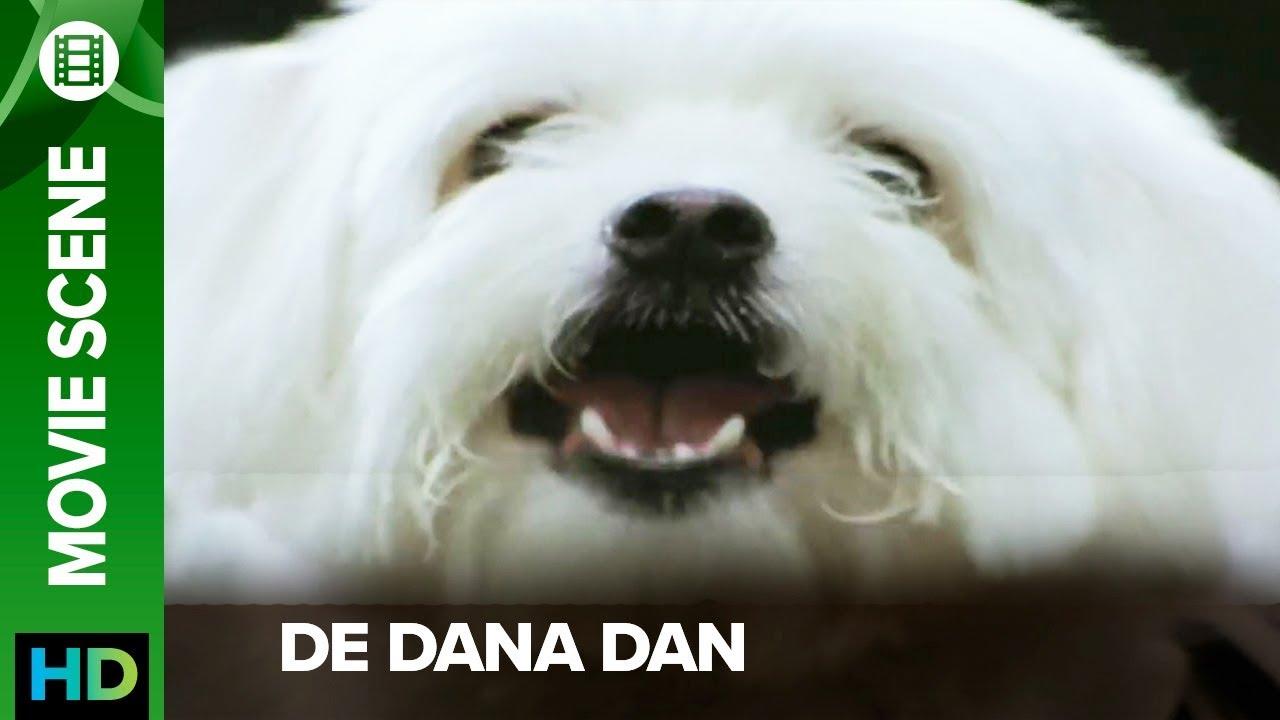 Moolchandji The Ultimate Dog De Dana Dan Movie Scene Youtube