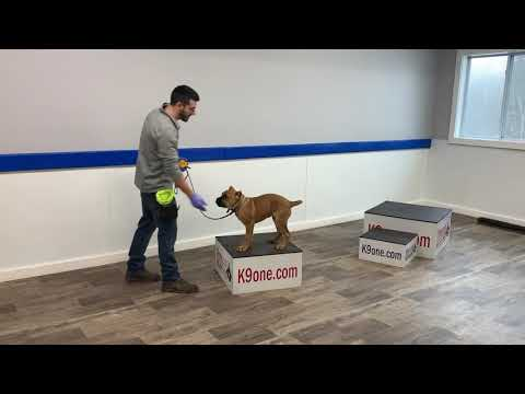 K9one Dog Training: Mela Rotante E-collar Conditioning