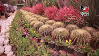 «زهور الربيع».. معرض سنوي يجمع منتجي نباتات الزينة بحديقة الأورمان