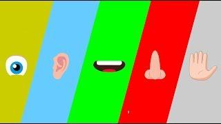 Okul öncesi duyu organları ile ilgili şarkı
