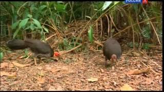 Четвертая серия / Из жизни животных / Правила общежития на просторах Австралии