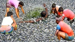 Awesome Fishing | Unique Fish Trapping System |  Fish Trapping System Of Catching Country Fish.
